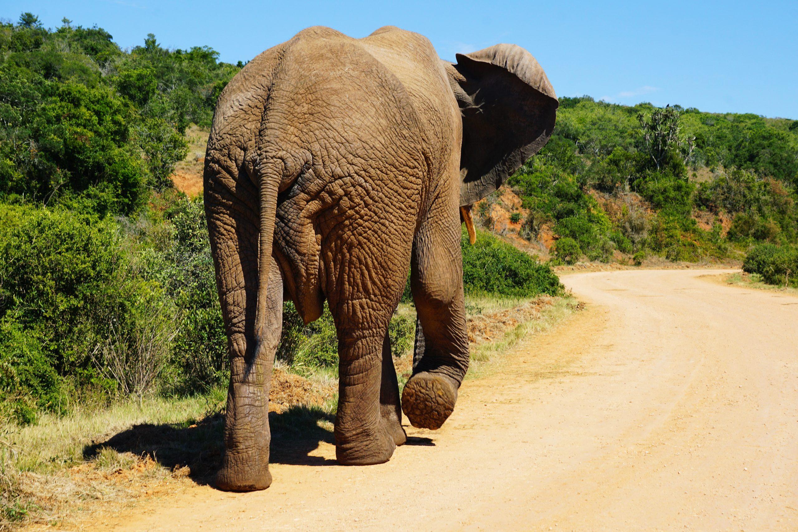Voyages Yulgo Afrique du Sud Elephant Safari