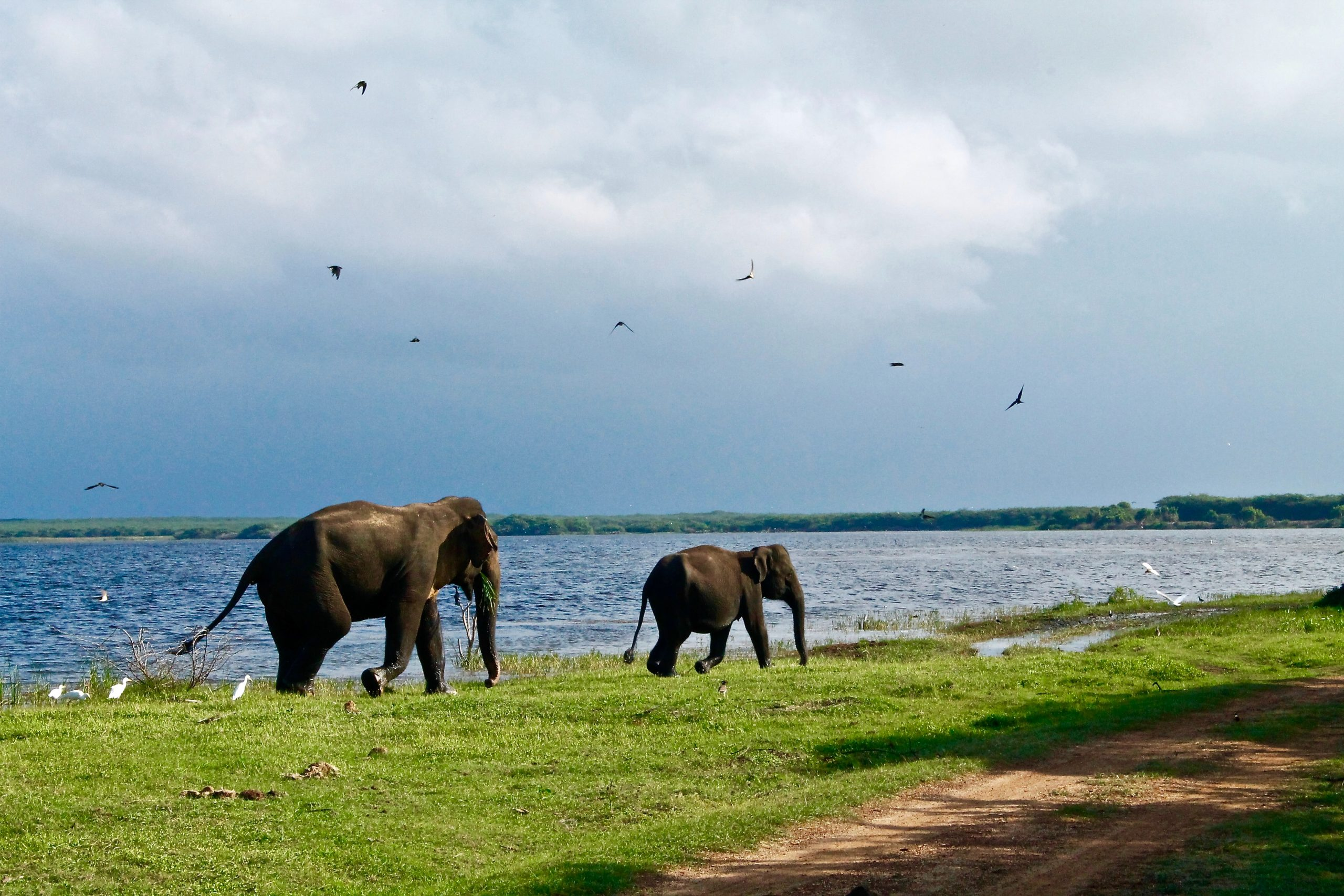 Voyages Yulgo Sri Lanka elephants
