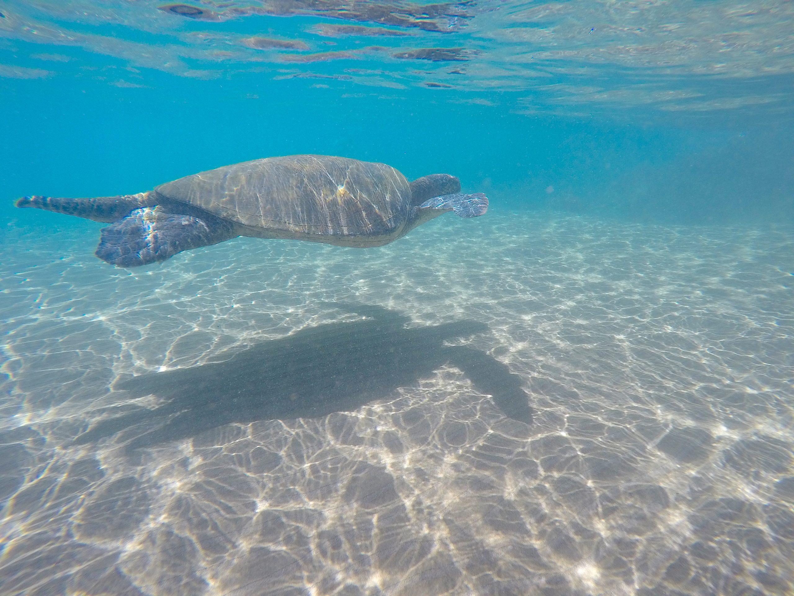 Voyages Yulgo Hawaii Kauai snorkeling