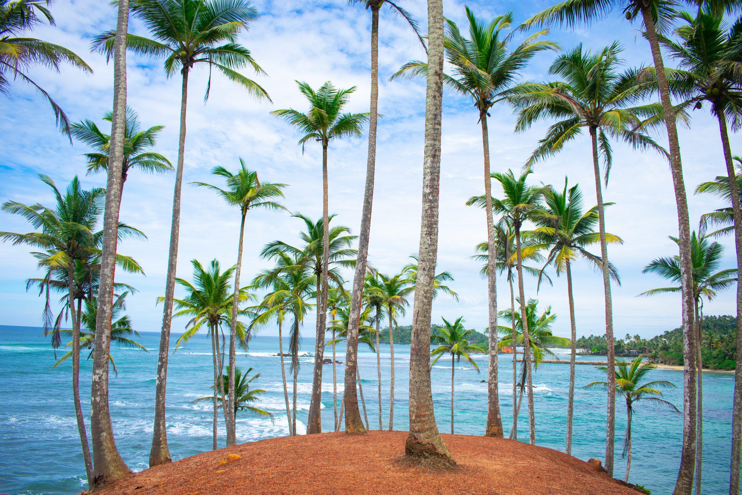 Voyages Yulgo Sri Lanka Coconut Hill Mirissa