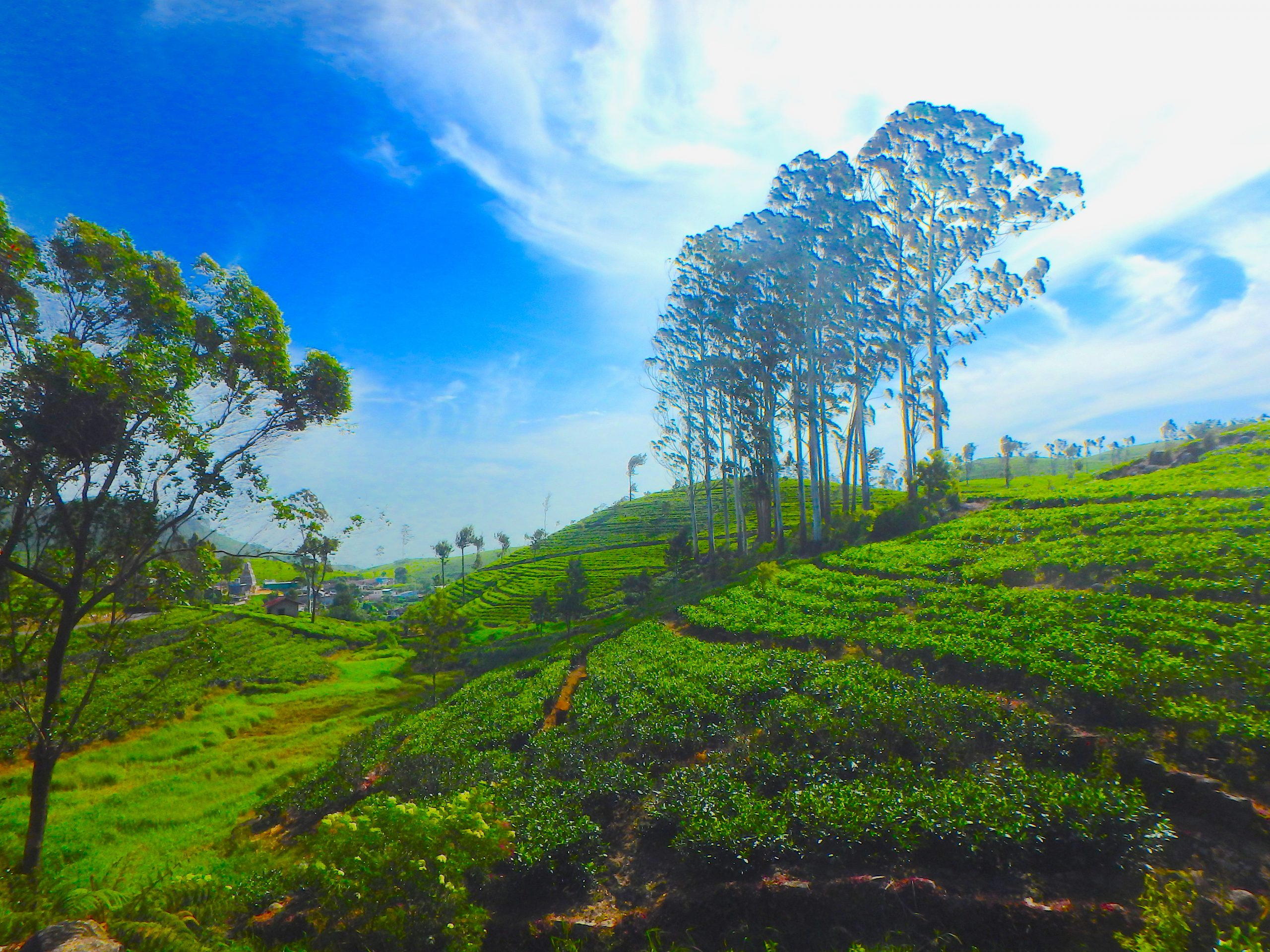 Voyages Yulgo Sri Lanka Tea Plantations