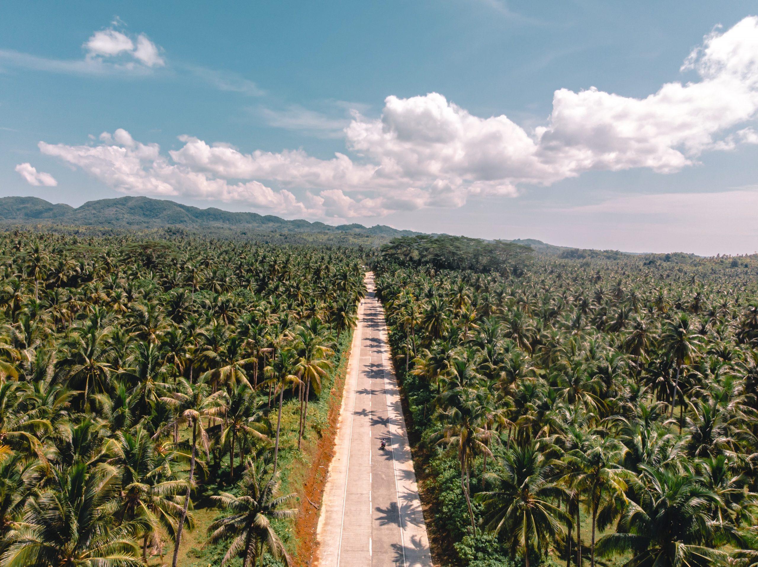 Voyages Yulgo Philippines Palmtrees Siargao