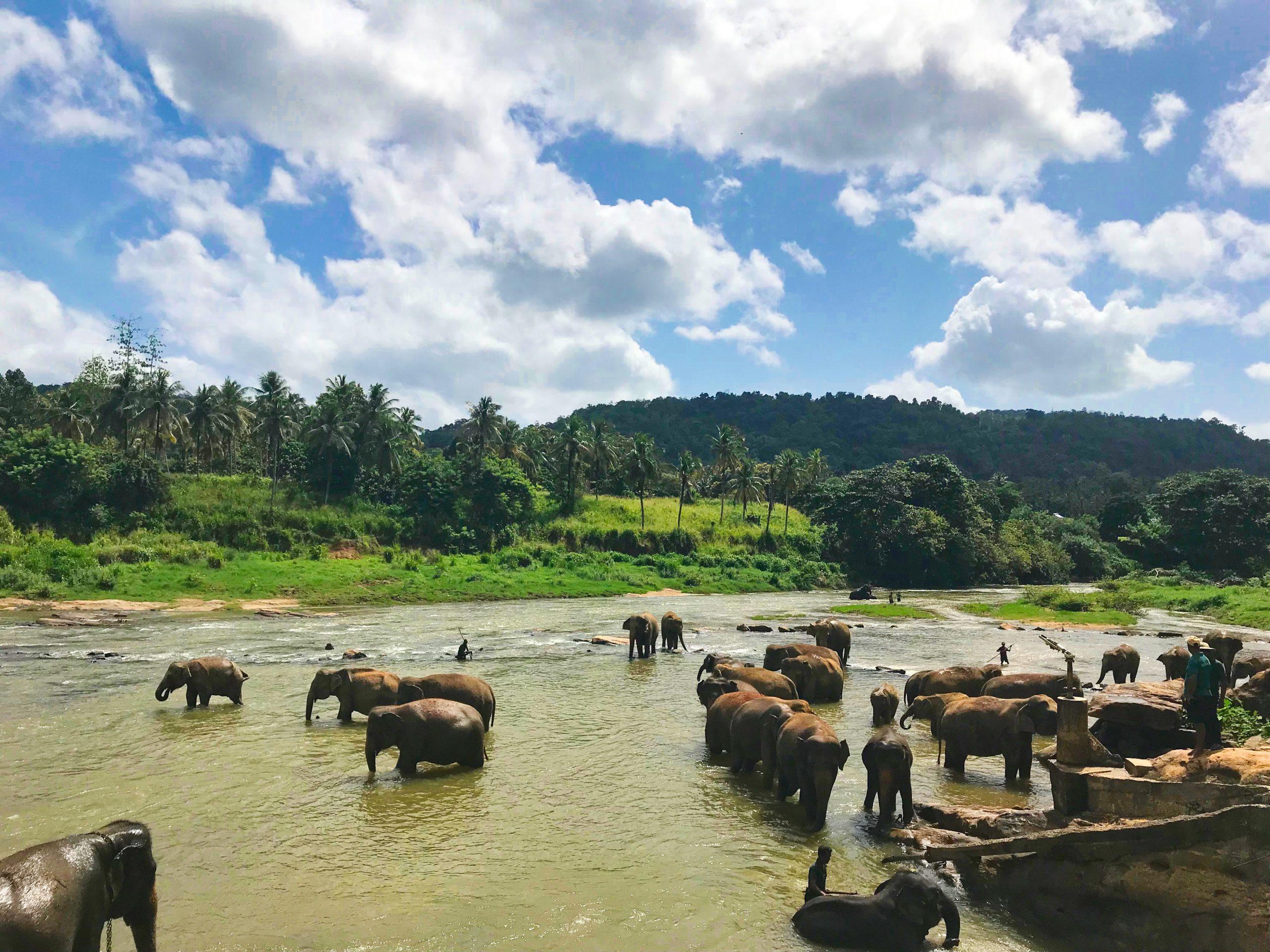 Voyages Yulgo Sri Lanka Uda Walawe National Park
