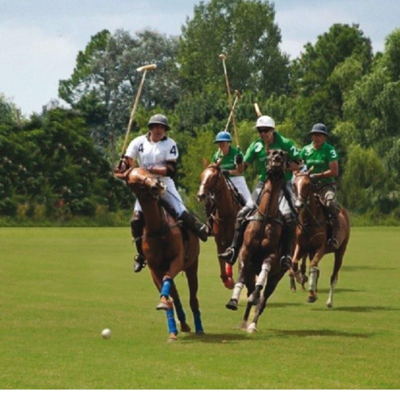 Argentine Polo Yulgo