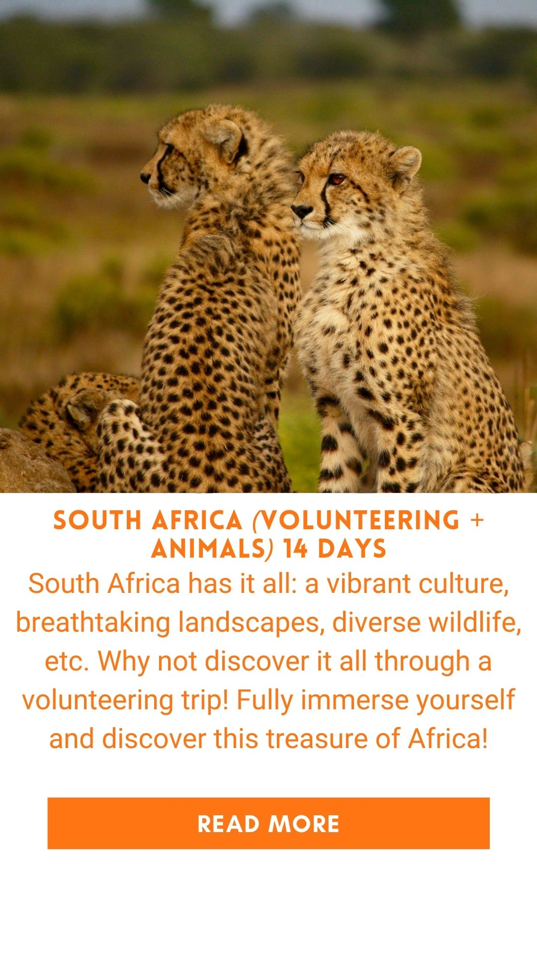 Organized trip in South Africa animals and safari volunteering